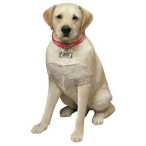 life-size-male-yellow-lab